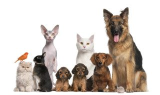 Does Pet Insurance Have You Barking up the Wrong Tree?